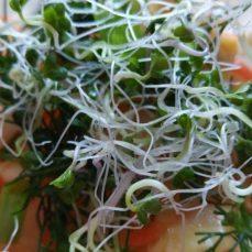 5-ти дневные проростки как гарнир к салату из квашеной капусты